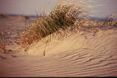 dune-grass-sandy-hook.jpg