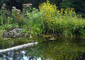 lake-flowers.jpg