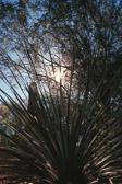 sun-through-cactus.jpg
