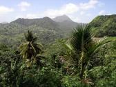 st-lucia-rainforest-palms-s.jpg