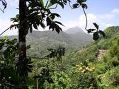 st-lucia-rainforest-scenic-.jpg