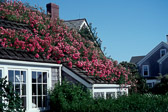 rose-covered-roof-nantucket.jpg